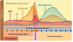 Влияние прогестерона на организм женщины